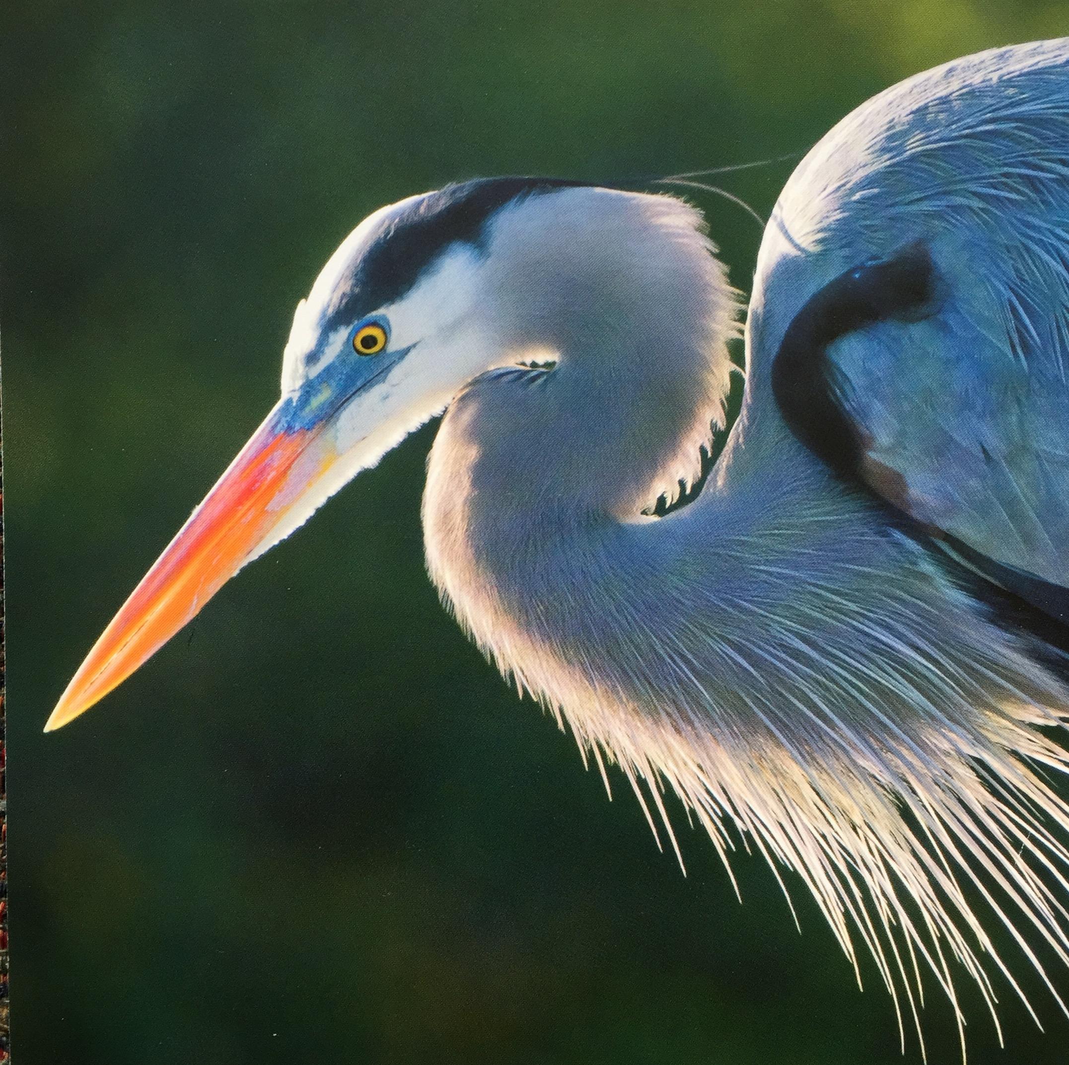 Shorebirds, Seabirds & Little Brown Birds with Mark Elliott