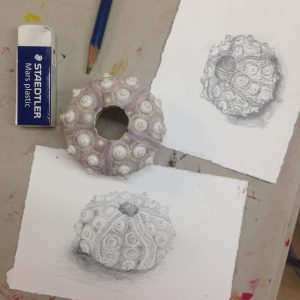 After-School Workshop: DRAWING & PAINTING THE NATURAL WORLD with Jess Graff @ Sou'Wester Arts & Ecology Center